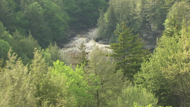 MS TD TU AERIAL View over trees and Black water Falls in Tucker County / West Virginia, United States