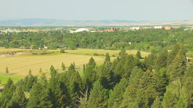 vídeos de stock, filmes e b-roll de ws aerial view over trees to montana state university / bozeman, montana, united states - bozeman