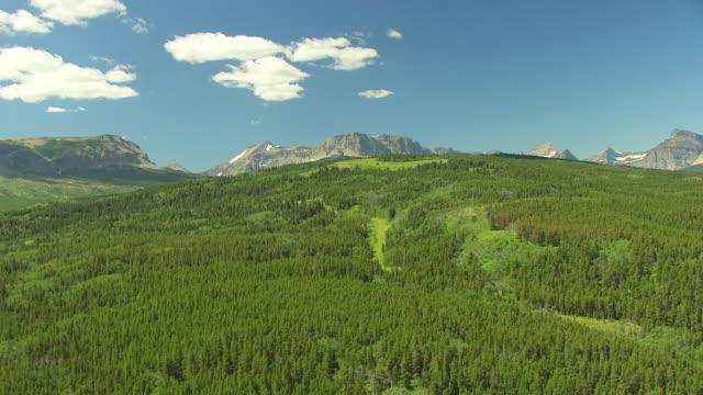 vídeos de stock, filmes e b-roll de ws aerial view over trees toward lake sherburne in glacier national park / montana, united states - glacier national park us