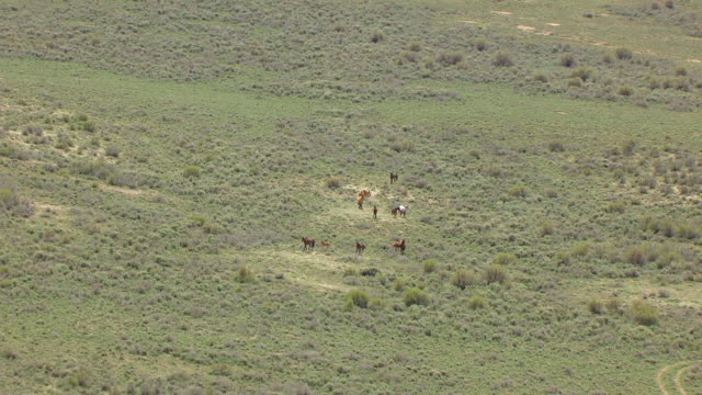 ws aerial view over wild horses in colorado plateau en route from desolation canyon to buffalo / utah, united states - colorado plateau stock videos & royalty-free footage