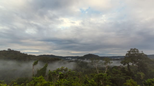 view overlooking misty amazonian rainforest at dawn - ecuador stock videos & royalty-free footage