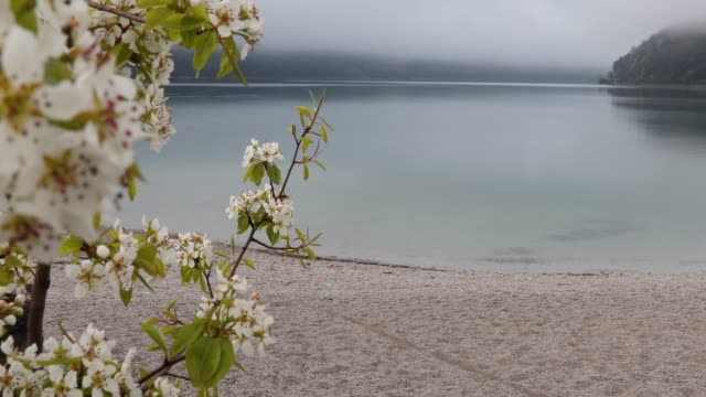 view past blossoms on beach to lake edge, below foggy mountains - coastal feature stock videos & royalty-free footage