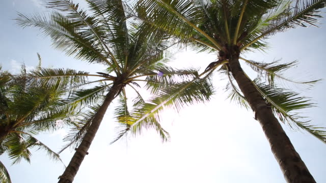View past palm trees to sunshine