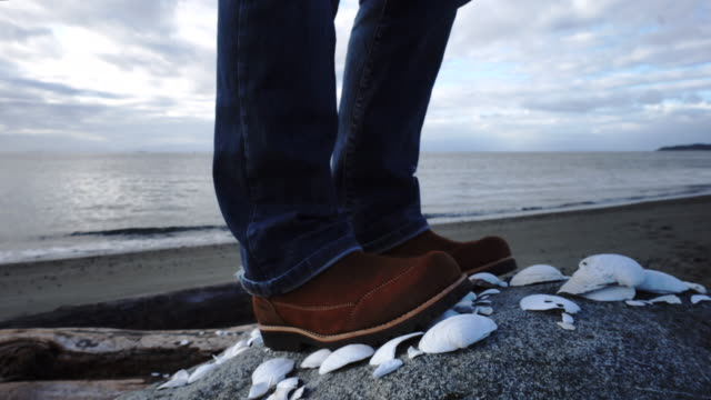 view past seashells to harbour and ocean - stepping stock videos & royalty-free footage