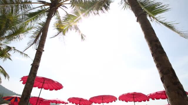 vídeos de stock, filmes e b-roll de ver os últimos guarda-chuvas e palmeiras ao sol - chapéu de sol