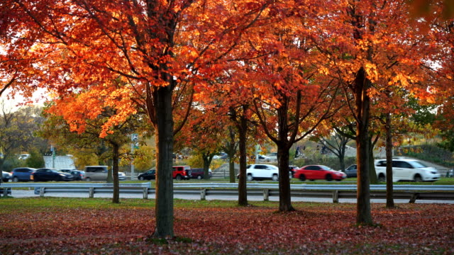 view road of autumn season in the toronto city - country road stock videos & royalty-free footage