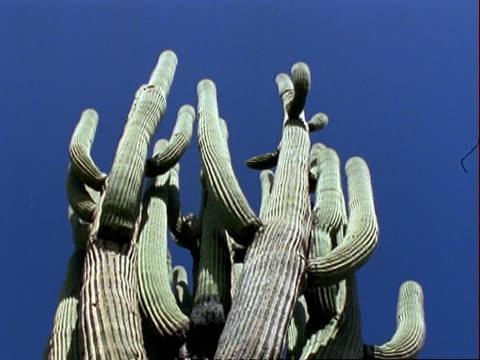 la view saguaro cactus, blue sky, usa - saguaro cactus stock videos & royalty-free footage
