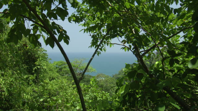 View through green leafy trees to horizon of blue ocean and misty sky, Tayrona National Natural Park [Parque Nacional Natural Tayrona], Sierra Nevada, Colombia