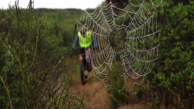 r/f view through spider web of senior man on early morning mountain bike ride - spinnennetz stock-videos und b-roll-filmmaterial