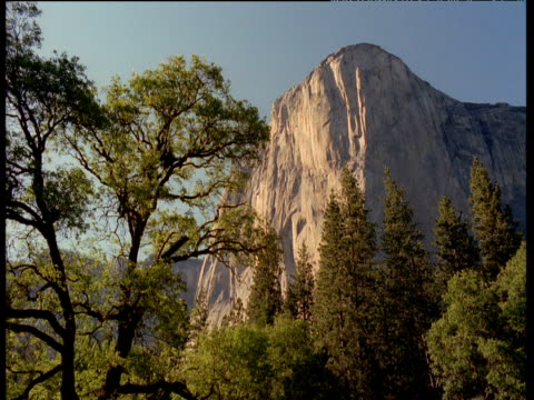 View through trees to El Capitan mountain, Yosemite National Park