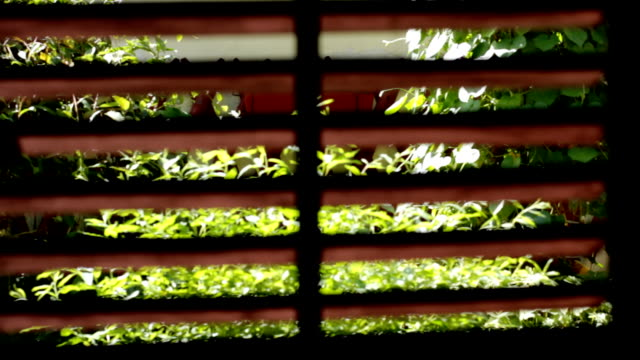 view trought window blinds on garden - last day stock videos & royalty-free footage