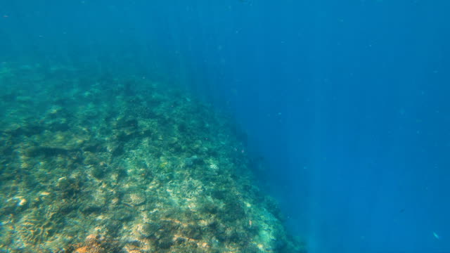View underwater of South sea coral reef Fiji