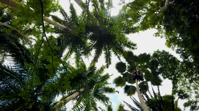 view up to tropical forest ceiling blowing in the wind - tall high stock videos & royalty-free footage