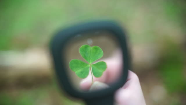 viewing a clover leaf through a magnifying glass for stem research - clover leaf shape stock videos and b-roll footage