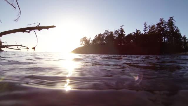 vídeos de stock, filmes e b-roll de viewing surface of water and tree bank near sunset - boa postura