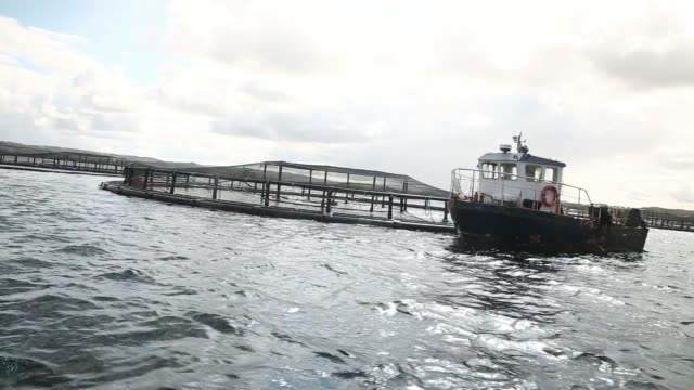 views from a moving boat as employees prepare a diver to inspect salmon fishing nets at the scottish salmon company ltds marine fishery on east loch... - examining stock-videos und b-roll-filmmaterial