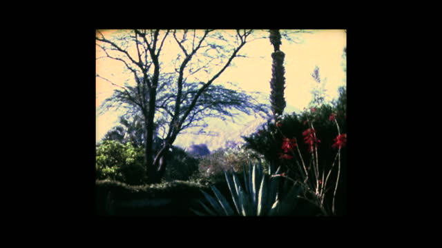 1981 views from garden in palm springs - palm springs california stock videos & royalty-free footage