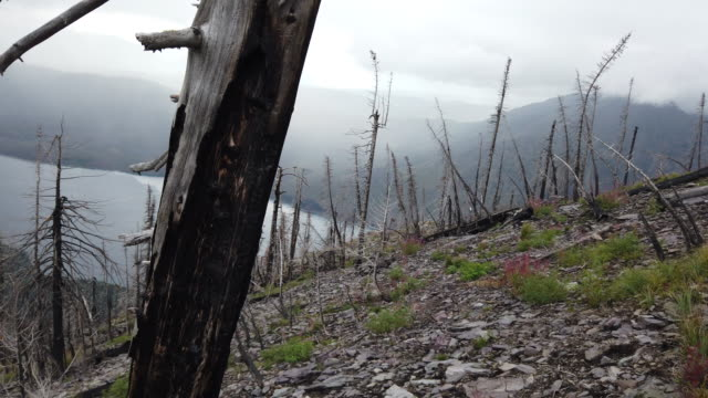 views from the mount brown lookout trail above lake mcdonald300 feet below through the skeletal remains of the 2017 sprague creek fire in glacier... - mcdonald creek stock-videos und b-roll-filmmaterial