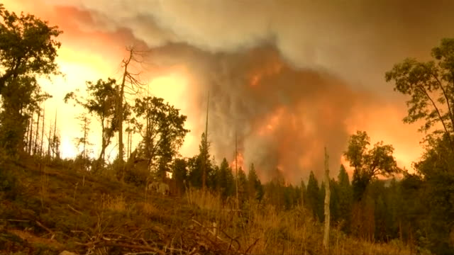 views of a fierce wildfire at yosemite national park - california stock videos & royalty-free footage