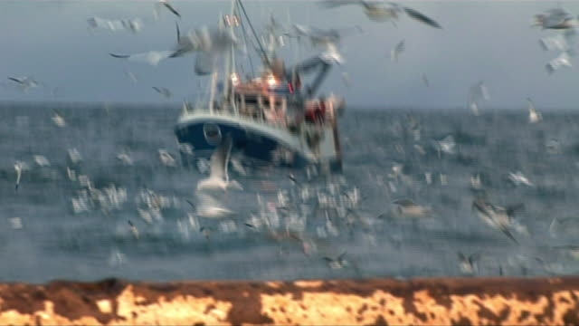 views of a fishing boat and a seal - trawler stock videos & royalty-free footage