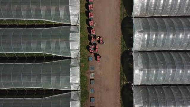 views of a strawberry farm - farm worker stock videos & royalty-free footage