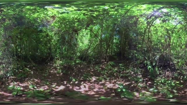 Views of an Amazon Rain forest in Brazil show in a 360 point of view