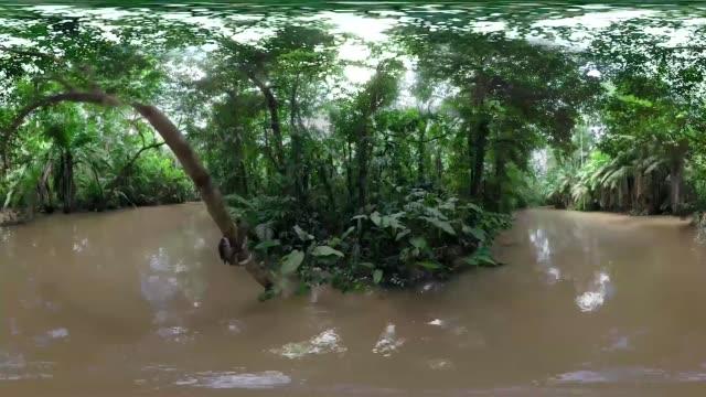 vídeos de stock e filmes b-roll de views of an amazon rain forest in brazil show in a 360 point of view. - panorama equiretangular