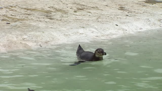 """views of animals at newquay zoo - """"bbc news"""" stock videos & royalty-free footage"""