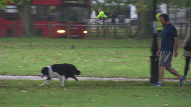 views of dogs being walked in a london park - 犬の散歩点の映像素材/bロール