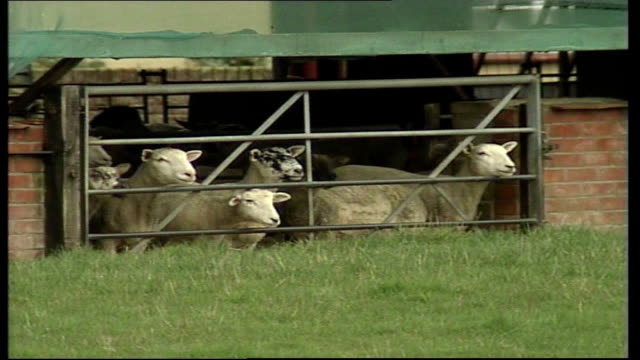 stockvideo's en b-roll-footage met views of farm which has animals contaminated with foot mouth disease england wick farm ext road along past farm / sheep in shed looking out though... - foot and mouth disease
