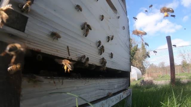 views of honeybees and hoverflies - bee stock videos & royalty-free footage