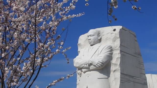 Views of Martin Luther Kind Jr Memorial with cherry blossoms / stone of hope / Cherry Blossoms MLK Jr Memorial on March 19 2012 in Washington DC