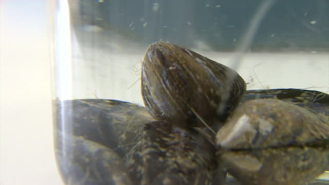 views of mollusc samples in a science laboratory - wildlife stock videos & royalty-free footage