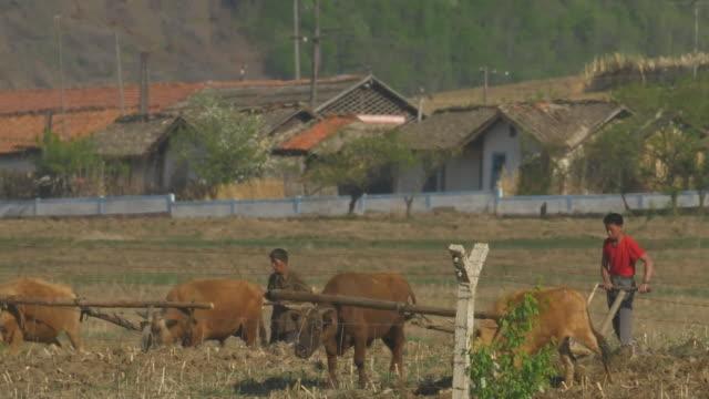views of people working on a north korean farm - nordkorea bildbanksvideor och videomaterial från bakom kulisserna