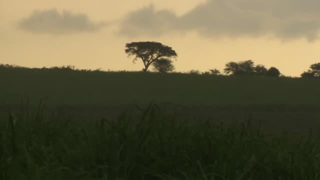 views of plains at sunset in kisumu kenya - plain stock videos & royalty-free footage