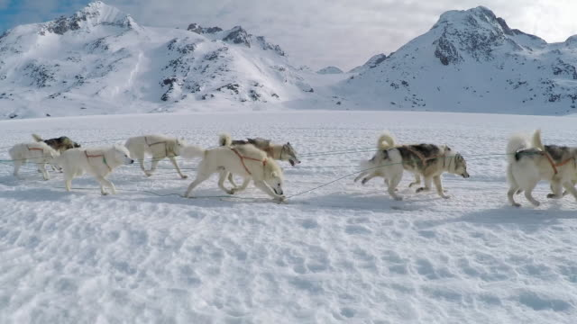 views of sled dogs in snowy landscape - snowcapped mountain stock videos & royalty-free footage