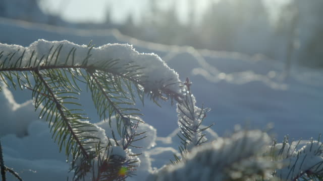 views of snowy forest - kiefer stock-videos und b-roll-filmmaterial