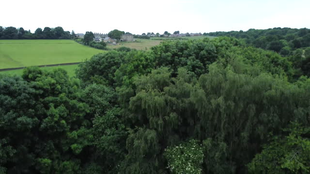 views of the jo cox community wood in liversedge - idyllic stock videos & royalty-free footage