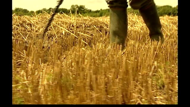 vídeos de stock e filmes b-roll de viking treasure hoard found in north yorkshire yorkshire ext dave whelan using metal detector as walking across stubble of cornfield andrew whelan... - barba por fazer