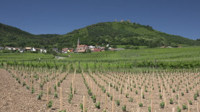 stockvideo's en b-roll-footage met village at new vineyard with three castles of eguisheim - eco tourism