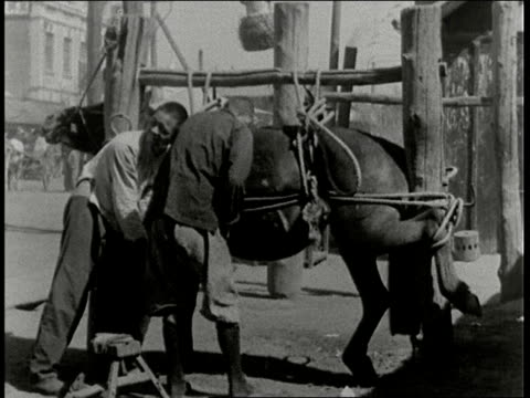 stockvideo's en b-roll-footage met village blacksmith puts shoe on horse / manchuria - 1938
