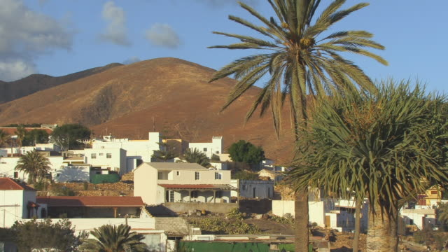 ms, village by hillside / pajara, fuerteventura, canary islands, spain - fan palm tree stock videos & royalty-free footage