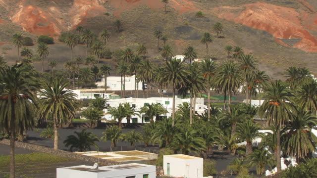ms, ha, village haria, lanzarote, province of las palmas, canary islands, spain - fan palm tree stock videos & royalty-free footage