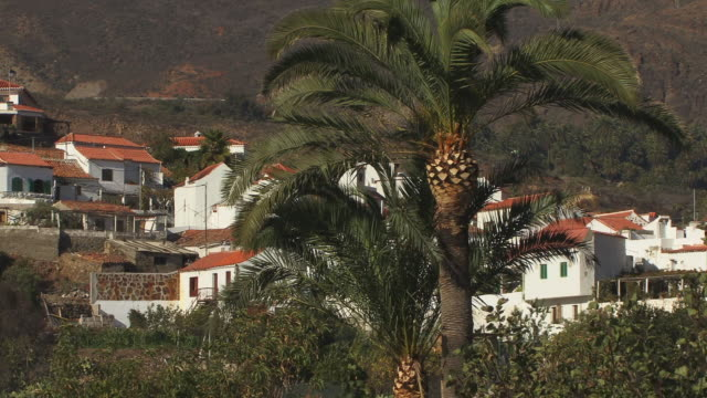 ms, village houses, palm tree in foreground, fataga, gran canaria, canary islands, spain - fan palm tree stock videos and b-roll footage