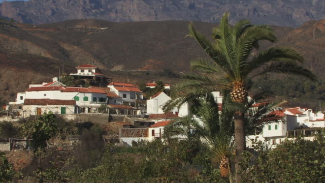 ms, village houses, palm tree in foreground, fataga, gran canaria, canary islands, spain - fan palm tree stock videos & royalty-free footage