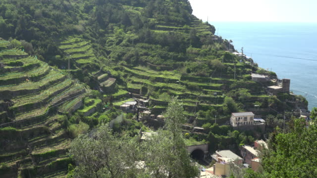 PAN / Village in valley at terraced fields of Vernazza