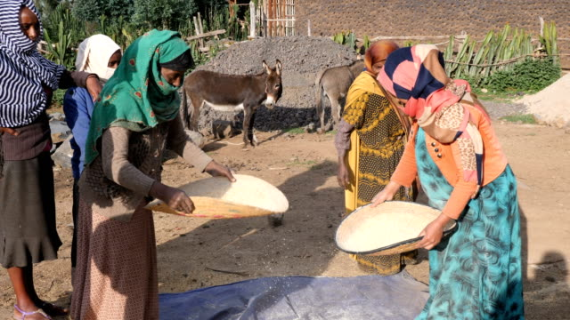 village tribal women sifting teff grain in rural countryside - horn of africa stock videos & royalty-free footage