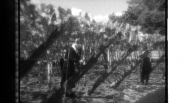 Village women harvest grapes in Yamanashi Prefecture