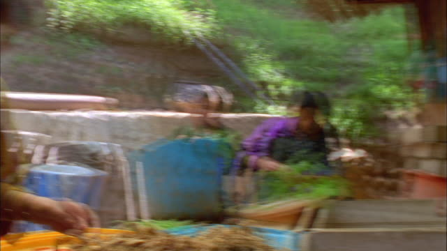 village women process plant fibers by hand. available in hd. - plant process stock videos & royalty-free footage