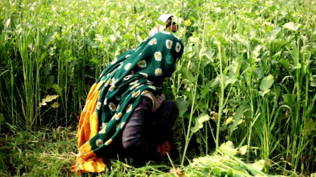 Dorffrauen im grünen Bereich